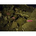 SNAPLIGHT BATON LUMINEUX 15CM - 12H